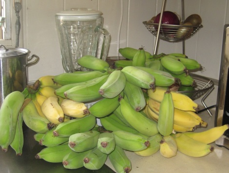 Bananas, fresh off the tree in Honolulu.