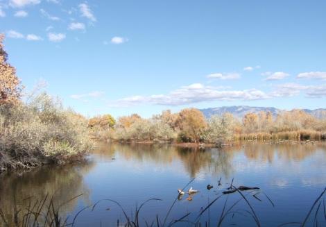 The Rio Grande in Albuquerque.
