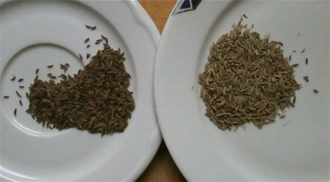 Caraway, on the left, and cumin, on the right. (Yes, they look really similar!)