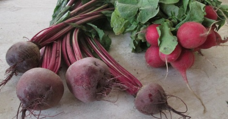 Young beets and radishes...