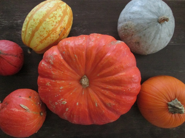 A variety of pumpkins.